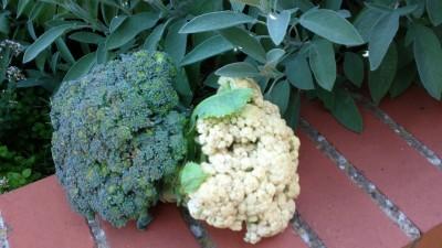 Broccoli and cauli