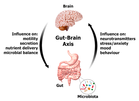 Are Our Intestines Governing Our Stress Response?